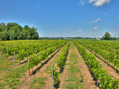 Discover Huron County's Unique Terroir For Complex Wine